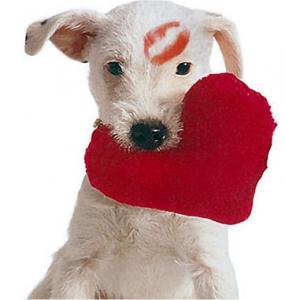 Full of Heart Dog