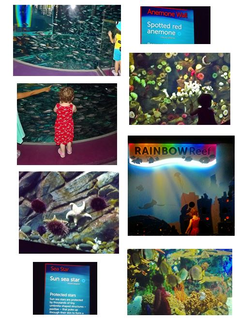 Ripley's Aquarium of Canada in Toronto
