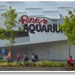 Ripley's Aquarium of Canada-  Summer Family Fun
