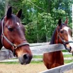 Land O'Lakes Rescue Petting Farm Ontario