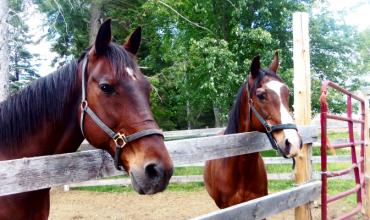 Land O'Lakes Rescue Petting Farm