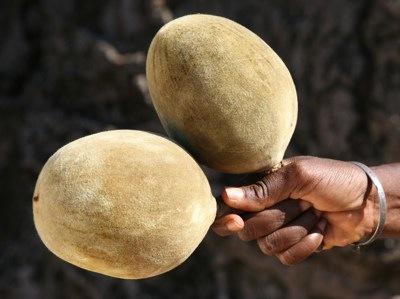 PandaVita Organic Baobab Powder