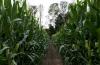 Cricklewood Farm, Orchard & Corn Maze