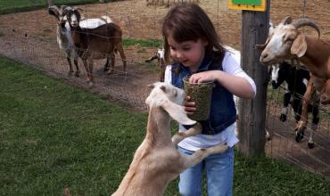 Promise Land Family Fun Farm