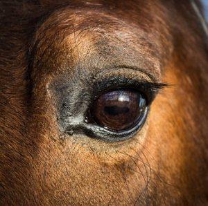 Horses Make Facial Expressions Just Like Humans