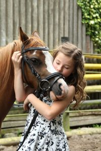 how do horses read human emotional cues