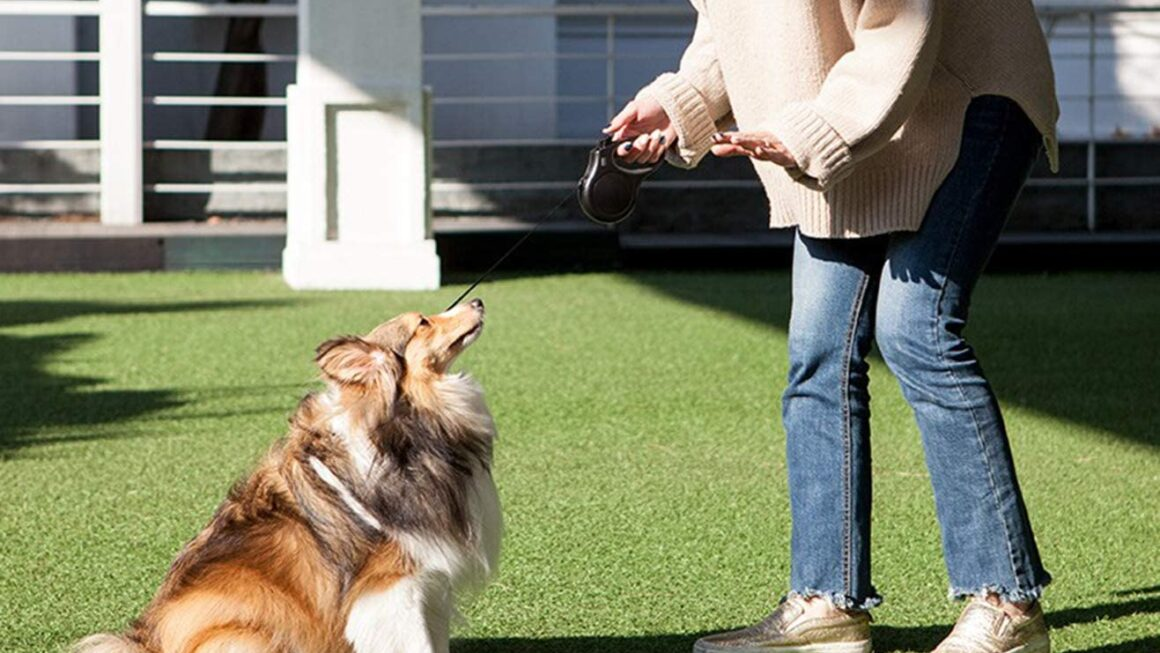 Choosing the best retractable dog leash – ipetcompanion