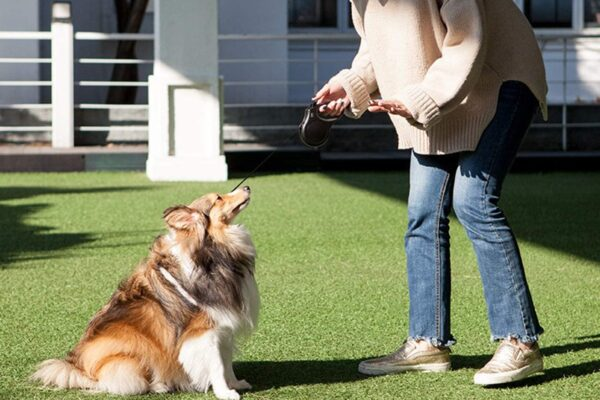 Choosing the best retractable dog leash – ipetcompanion
