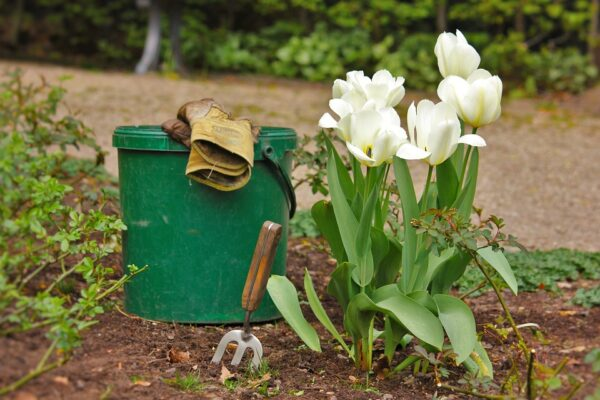 Gardening Benefits for Anti-Aging