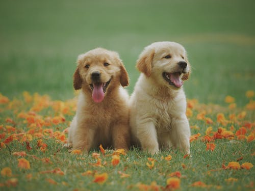 Dog Feeding Guide: What Food Is Best for Your Puppy?
