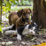 What to look for in a Dachshund puppy before taking one home