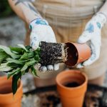 The benefits of having your own garden