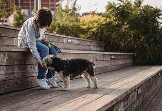 emotional pet support.