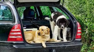 trip with dog